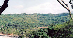 the forested area