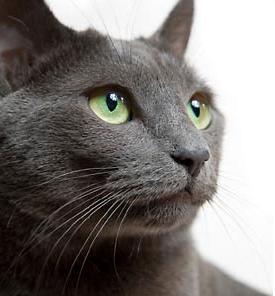 Το στέκι του γάτου