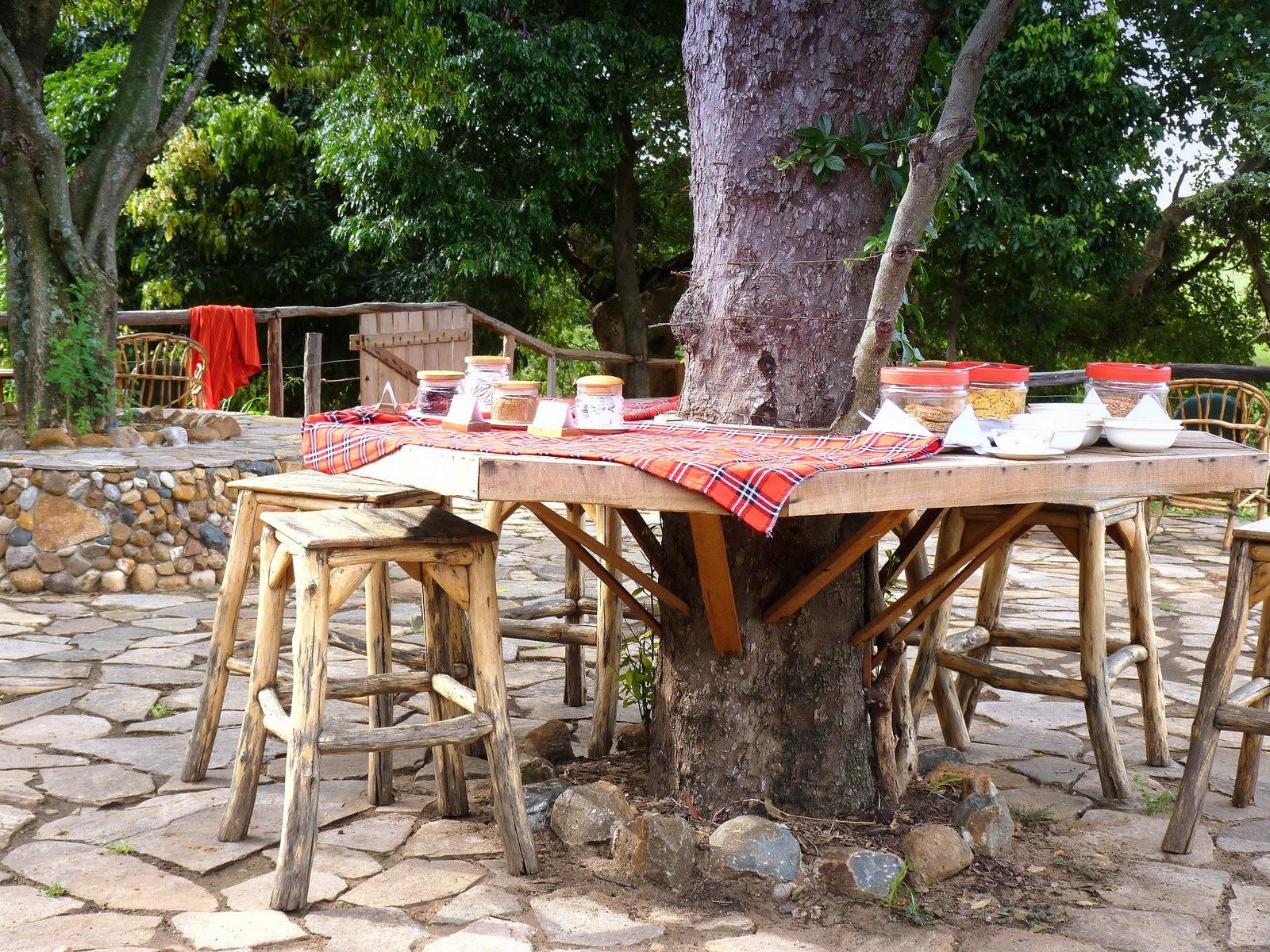 Mara fan das oloshaiki camp in der masai mara for Gartengestaltung um einen baum