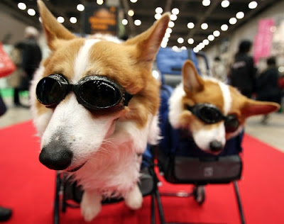 Dogs wearing sunglasses inside