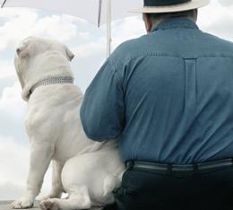 Obesidade chega aos animais que convivem com o homem