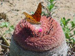 Alimento para as borboletas
