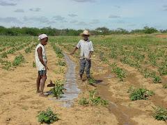 Irrigação de slavação na caatinga