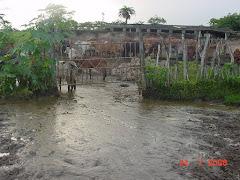 A lama em um curral de boi