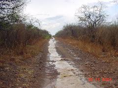 Água de chuva na caatinga II