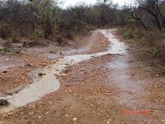 As chuvas de outubro de 2010 na caatinga