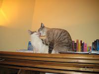 Freyja & Maia