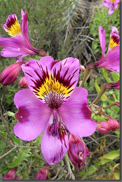 Las 8 flores mas hermosas de la tierra taringa - Tipos de flores silvestres ...