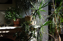 Plants and light