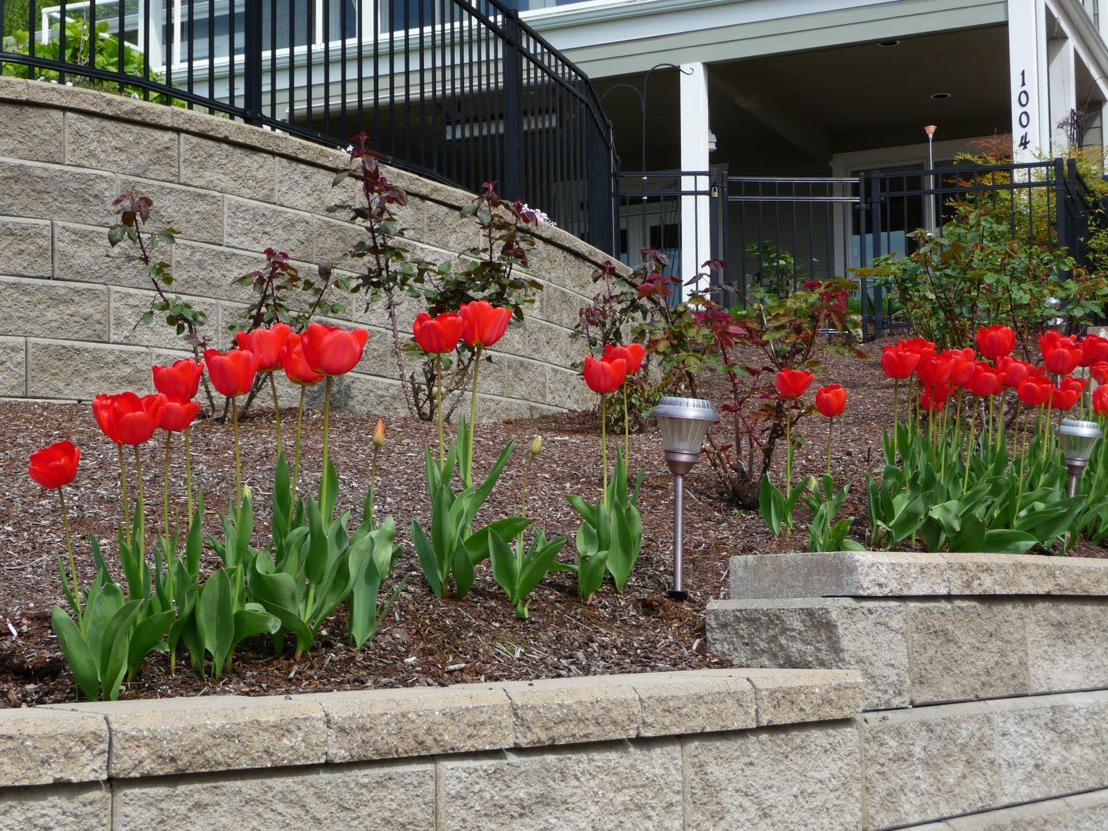 Debbie Angel's Garden: Tulip '
