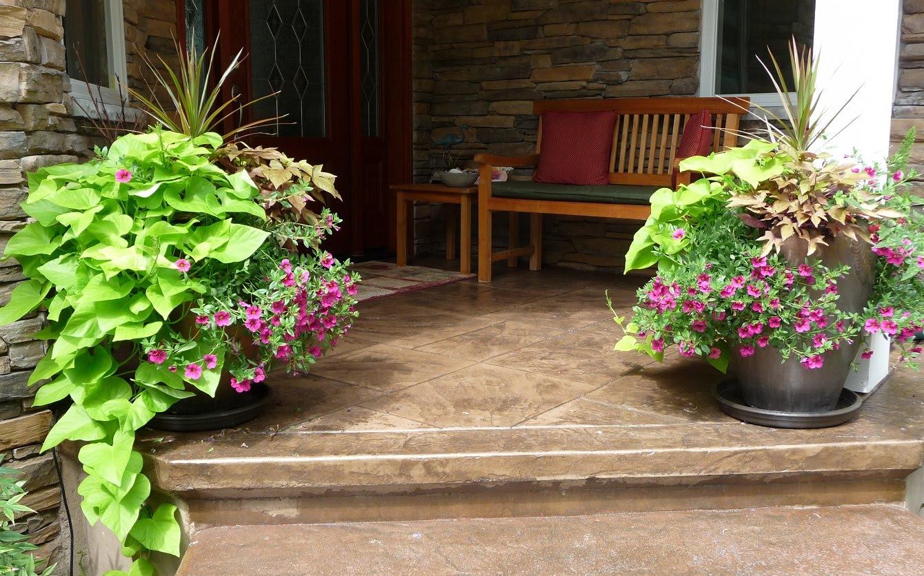 Debbie Angel\'s Garden: Container plantings