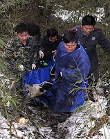 Xiang Xiang dies