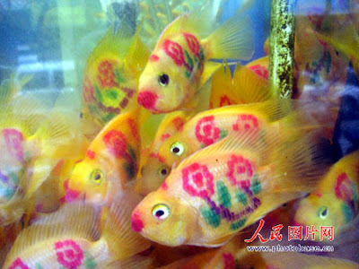 Those tattooed parrot fish were spotted in an aquarium shop in Suzhou,