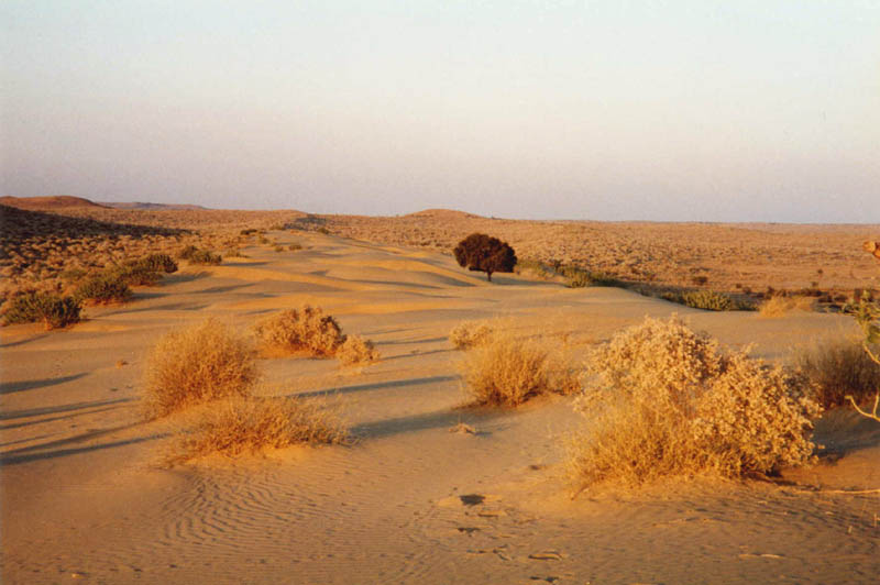 Travel India Tourism and India Tour Packages: Thar Desert ...