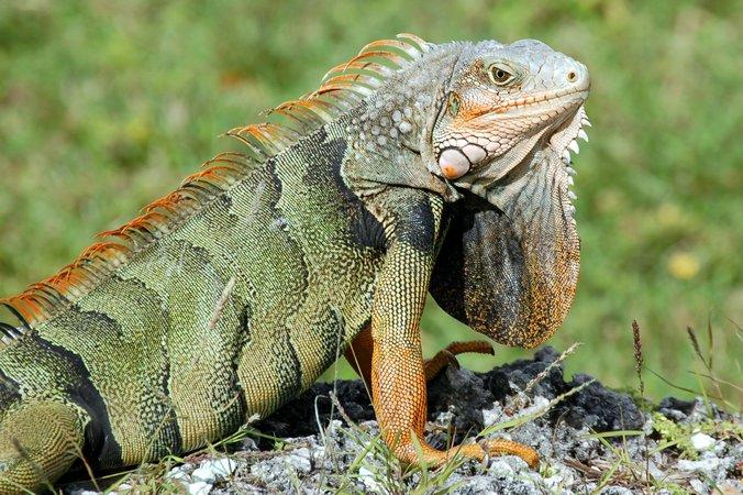 Reptiles 10 Examples Of Reptiles