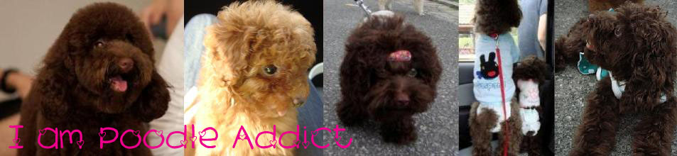 I am Poodle Addict