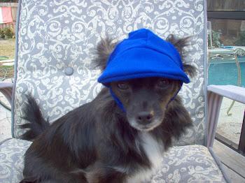 chihuahua hats