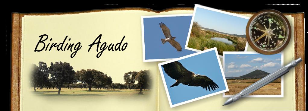 Birding Agudo