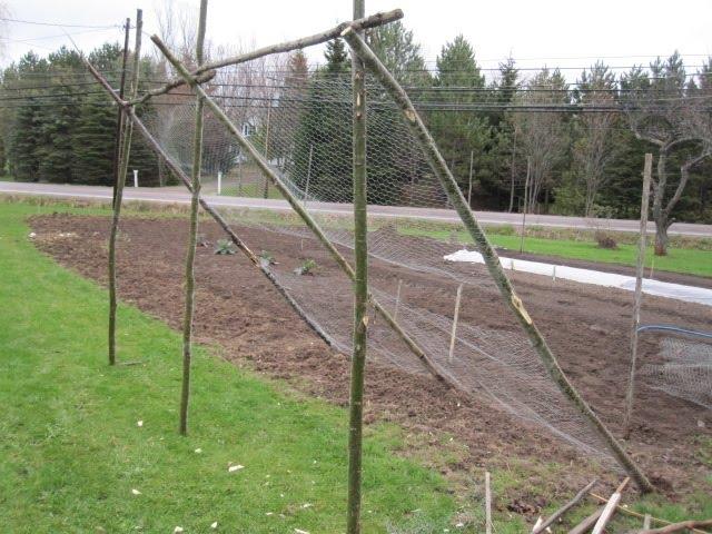 Cucumber Trellis Ideas Part - 36: Cucumber Trellis