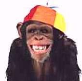 http://3.bp.blogspot.com/_EWF5IkBAVCA/SLsyzaacHRI/AAAAAAAAAOM/SaGM8atttUY/s400/macaco+rindo.jpg