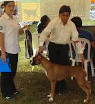 "ALMA ""RESERVADO"" DE BEST IN SHOW CACHORRO 26-05-08"