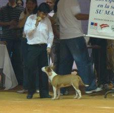 Ita Reservado de Best In Show, Feria Bucaramanga 2008