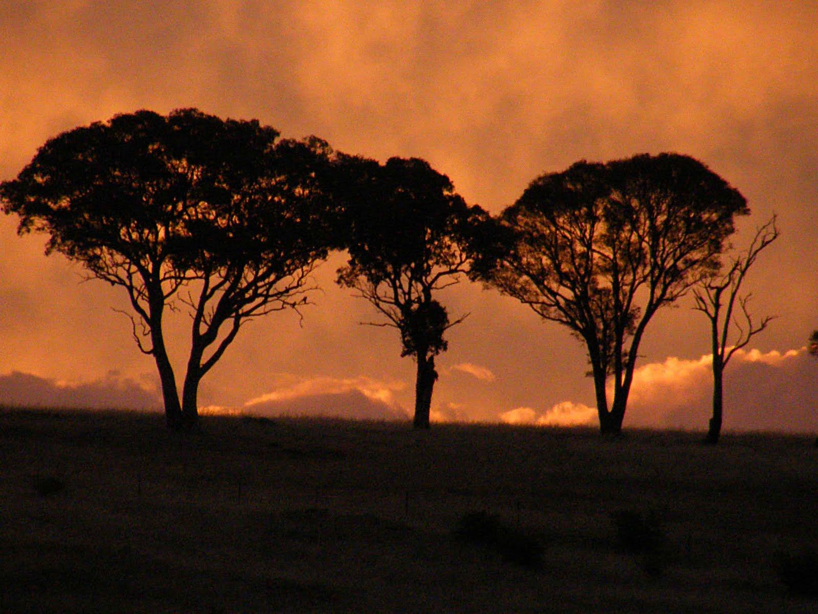 Tajanstvenim stazama duse... - Page 3 YC+Sunset+trees
