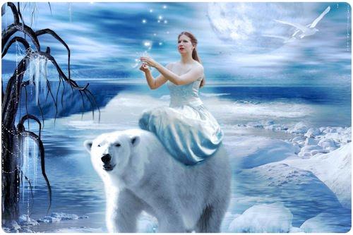 Fotografías, imágenes y dibujos de osos polares (+5000)