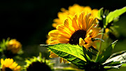 tengan una experiencia única e . dia de las madres flores imagenes mensajes de mayo