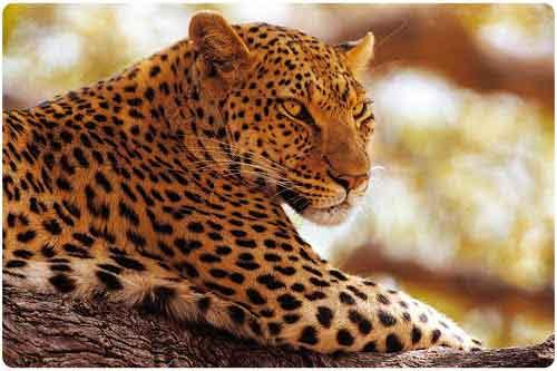 Animales salvajes (16 fotografías en alta resolución)