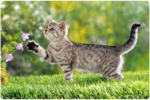 Almacén de wallpapers (15 imágenes gigantes de gatitos)