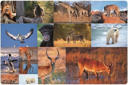 Pasarela por la sabana de Africa (14 fotos de animales)