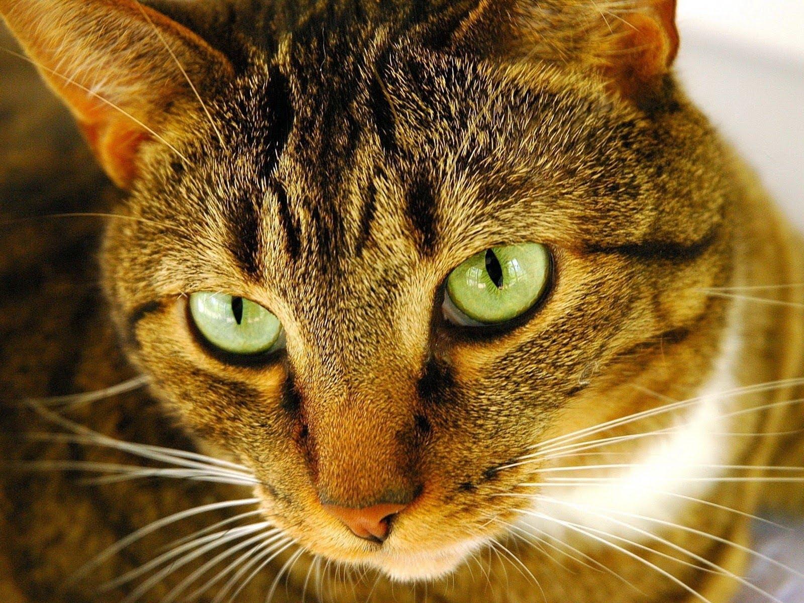 ver imagenes de animales tiernos - Ver fotos de animales tiernos para ser más productivos