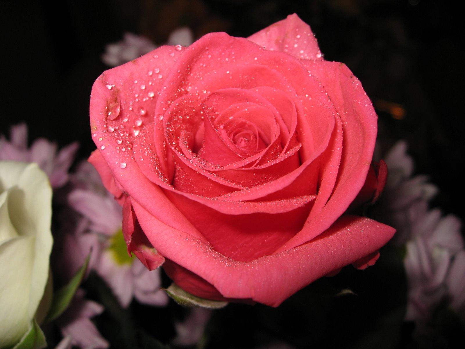 Banco de im genes rosas de colores parte vi 5 fotos for Fotos pinterest