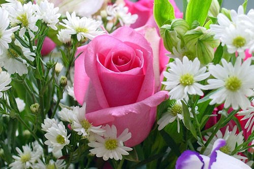 Rosas de colores parte VII (5 fotos impresionantes)