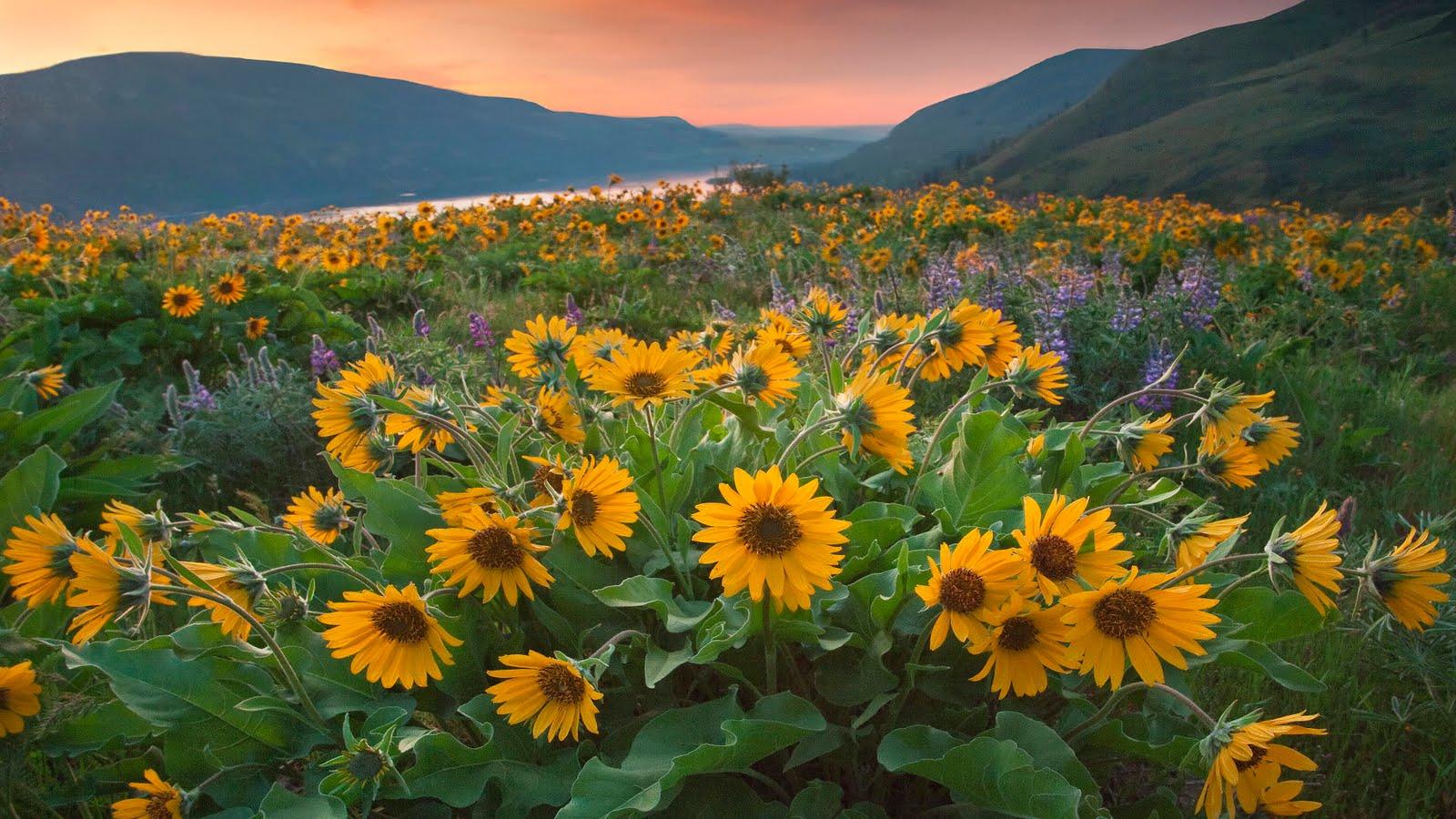 Idool jardines y flores 5 fotos para compartir en - Fotos de flores de jardin ...