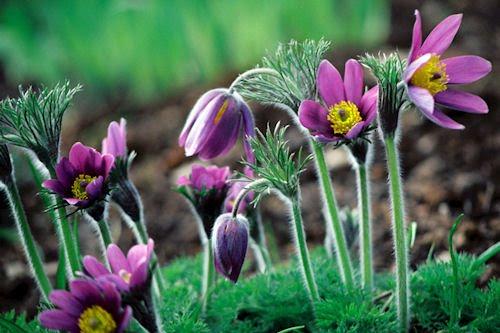 Las flores de mi jardín IV (10 imágenes de uso libre)
