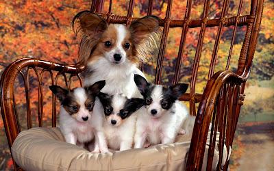 Imágenes y fotografías de perritos IV (12 wallpapers)