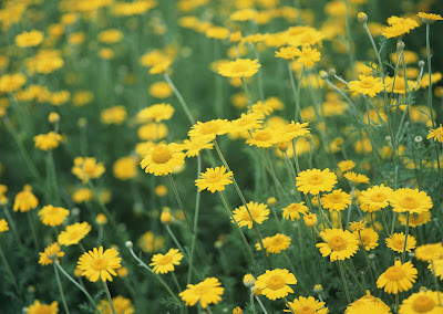 Imágenes y fotografías de flores