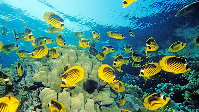 Animales que viven en el fondo del mar como Peces, tortugas, estrellas, etc.