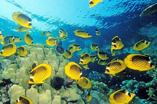 Viaje por el fondo del mar III (Animales Acuáticos)
