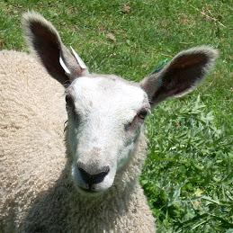 2009 lamb Karina