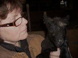 2011 Lambing begins
