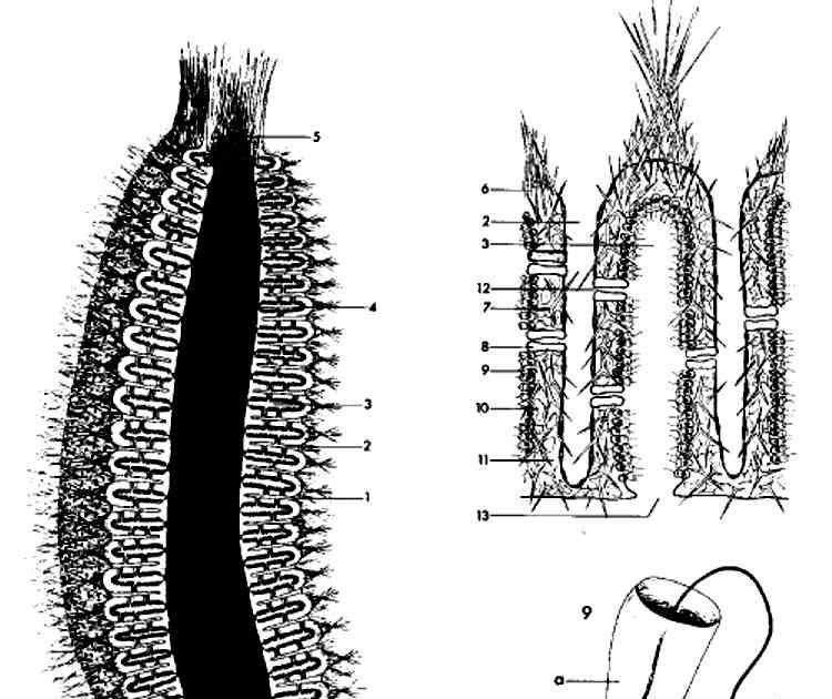 Asombroso Anatomía De Una Esponja Adorno - Anatomía de Las ...