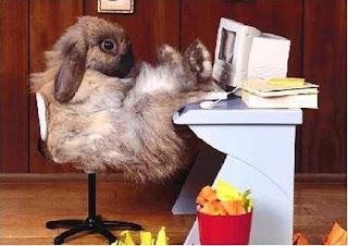 Un conejo muy listo