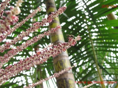 palm flower bee