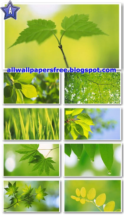 40 Green Leaves Widescreen Wallpapers 1680 X 1050
