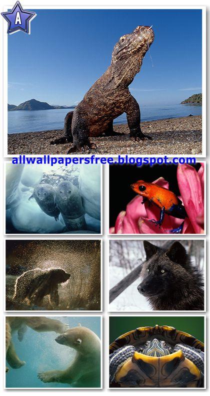 100 Amazing Animals Wallpapers 1600 X 1200 [Set 1]