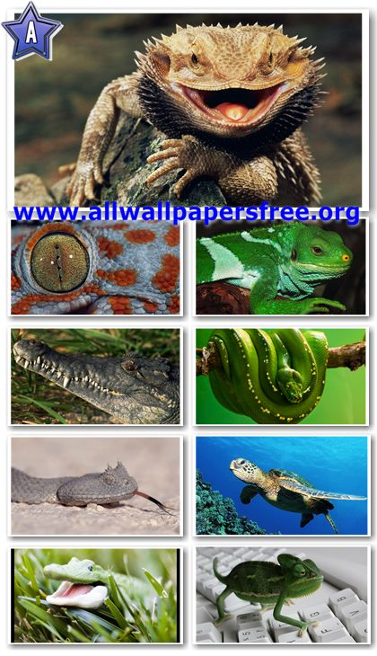 40 Reptiles Wallpapers Widescreen 1680 X 1050 border=