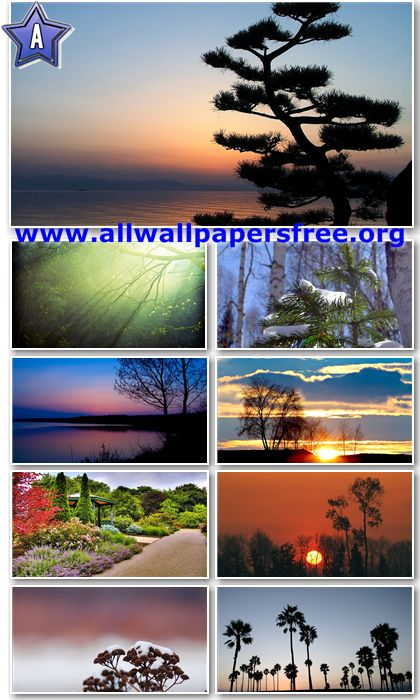 50 Beautiful Trees Full HD Wallpapers 1080p [Set 2]